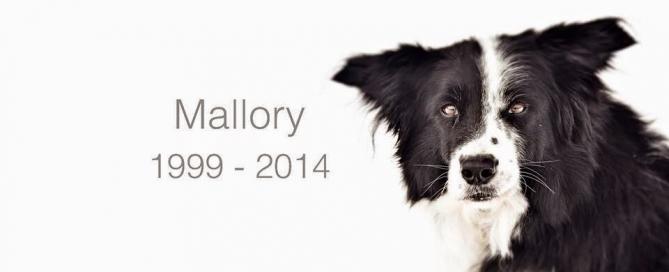 Addio-Mallory