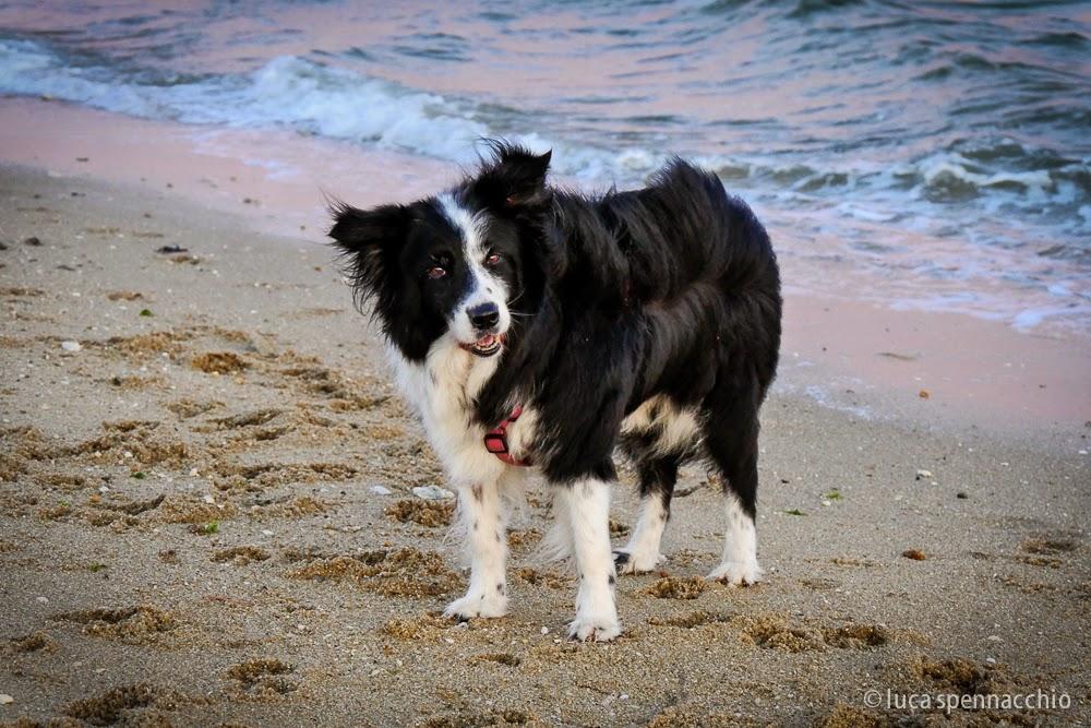 Mallory in riva al mare