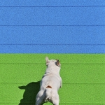 Dog Olimpics Games
