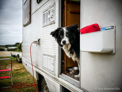 Border Collie in Camper