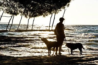 Samy e i cani in Istria