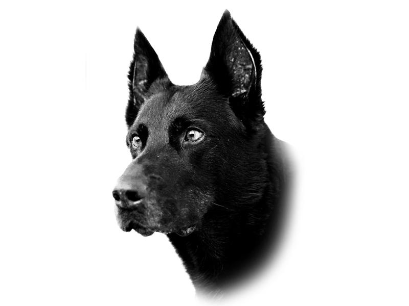 Luca Spennacchio Dog Projects