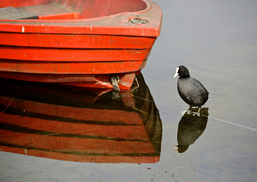 copertina_birdwatching