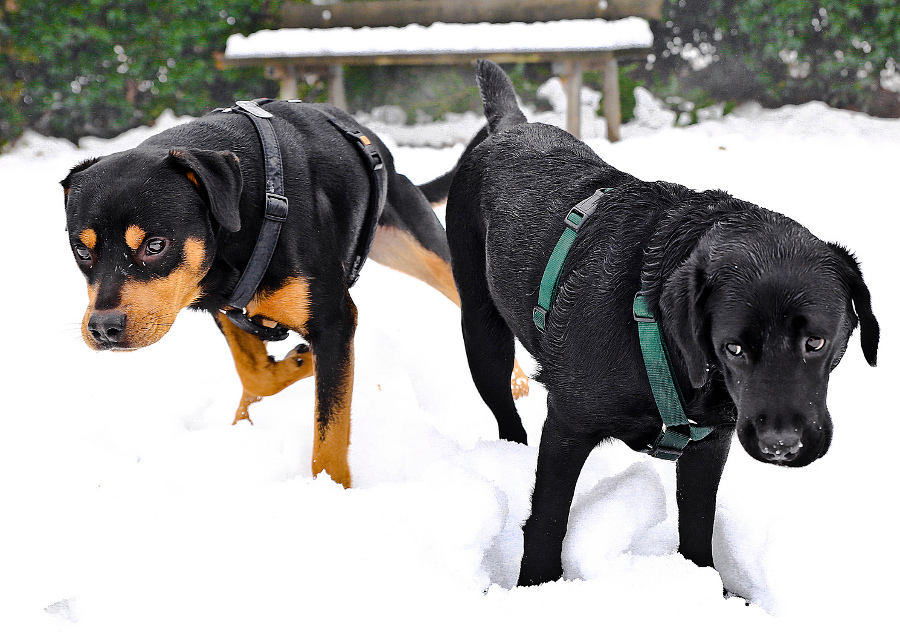 copertina_dog_in_the_snow
