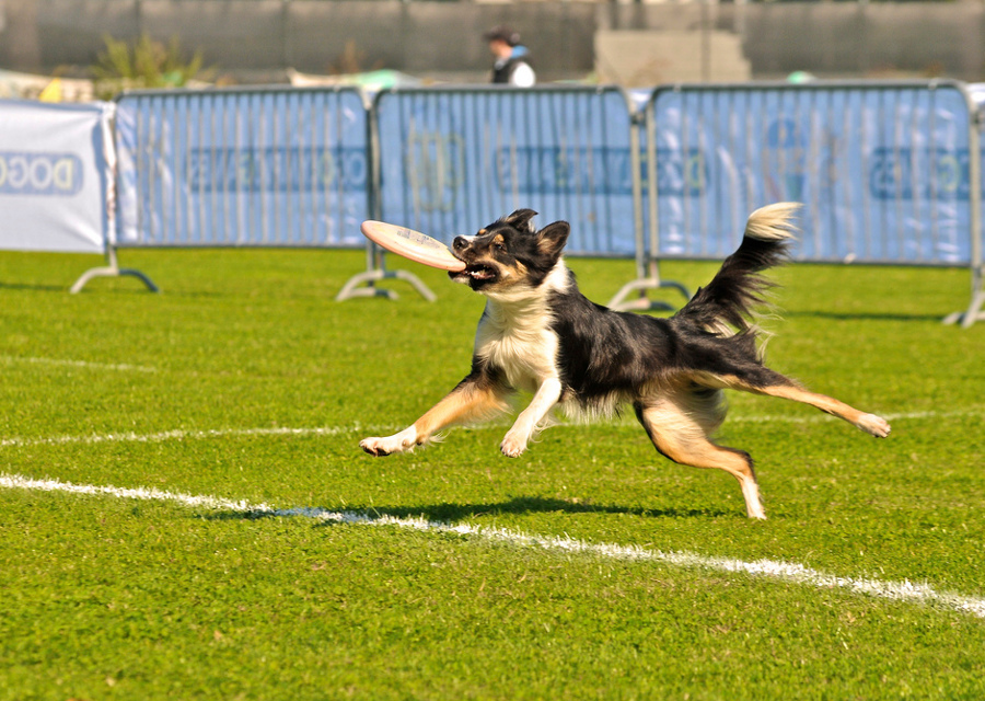 copertina_dog_olimpics