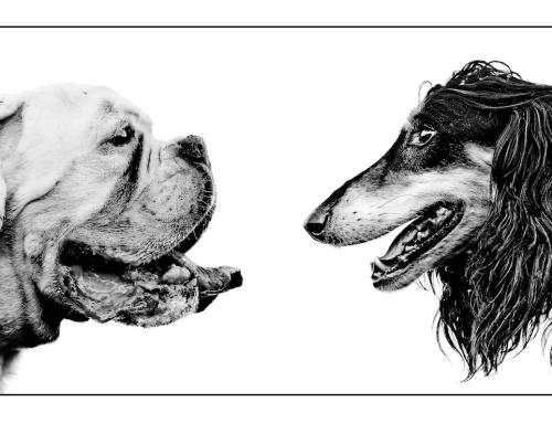 EVENTO – il cane: ieri, oggi, domani