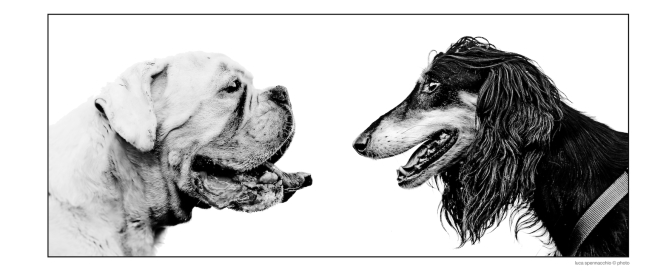 Due Cani_web