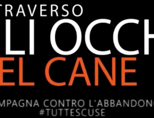 ATTRAVERSO GLI OCCHI DEL CANE OIPA